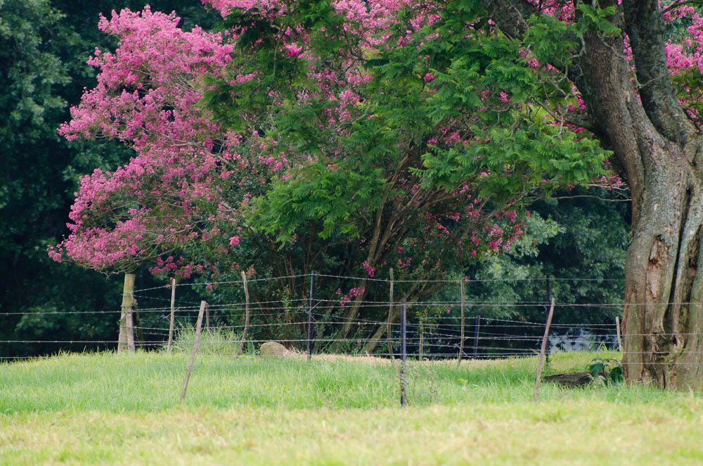 Karen E Photography SA