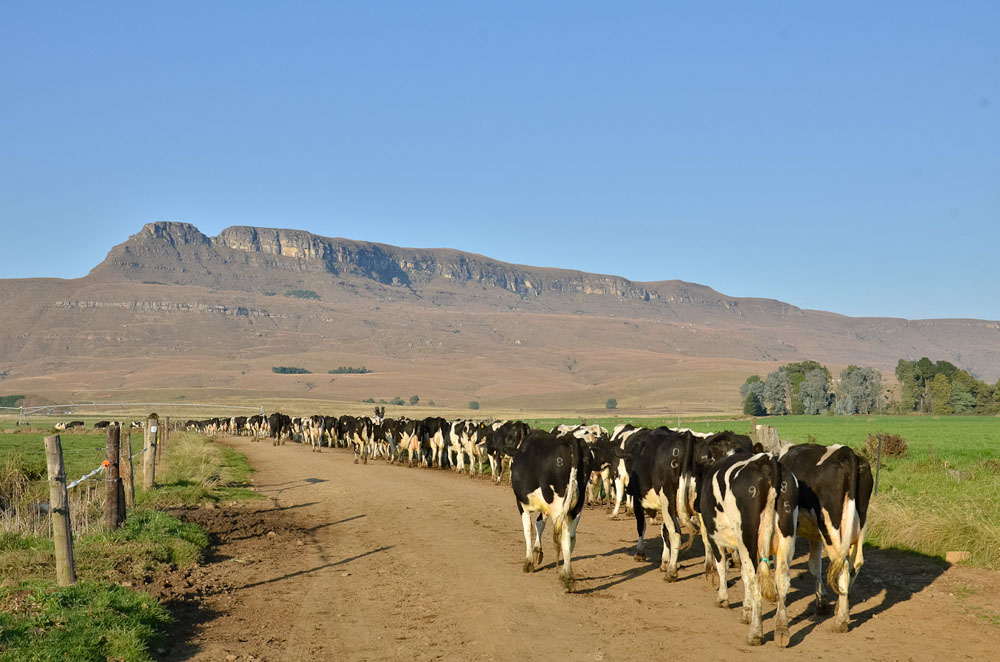 nottingham-road-kzn-berg-accommodation-drakensberg-midlands-balgowan-mooiriver80